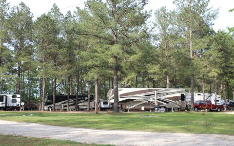 Peaceful Camping in the Pines