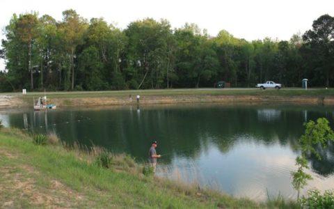 Fishing for bream